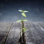 Start din fremtid i dag (foto se-institute.dk)